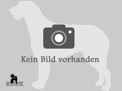 keinBildVorhanden800x600